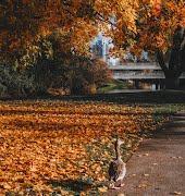 Ireland's best autumnal forest walks