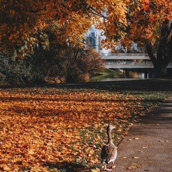 autumnal forest walks