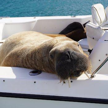 'I am a marine mammal observer': Dublin-born Finn van der Aar might have the coolest job in Ireland