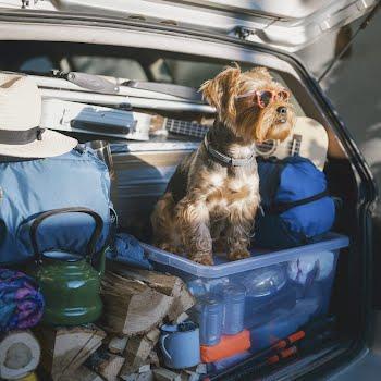 dog-friendly holidays Ireland