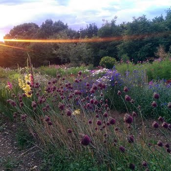 Britta Baranowsky The Flowerfield