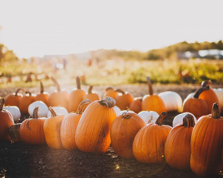 Nine Irish pumpkin patches to visit this Halloween