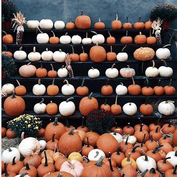 5 reasons to eat more pumpkins before Halloween