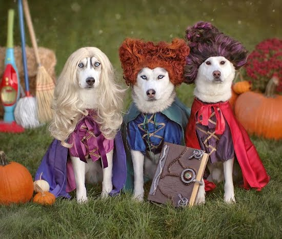 15 dogs who are costume-ready for Halloween