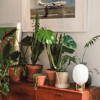 expert houseplant tips